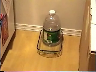 Diy Cat Feeder And Water Dispenser Precision Computing